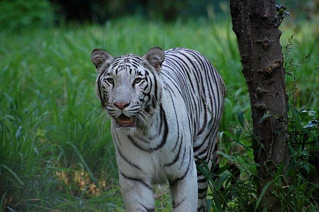 Here, Kitty, Kitty! Photo by shrikant rao