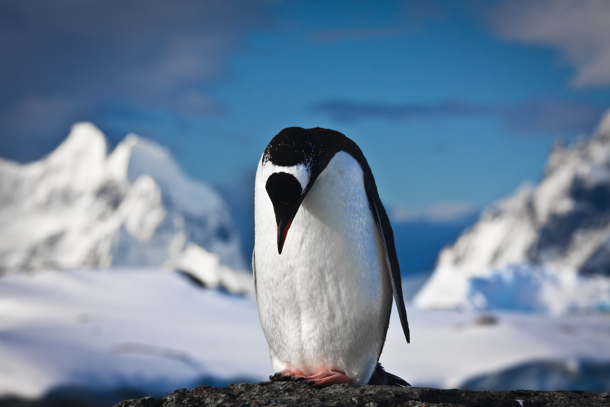 s cup s first penguins come to mumbai zoo s cup hey buddy what are you looking for photo credit shutterstock