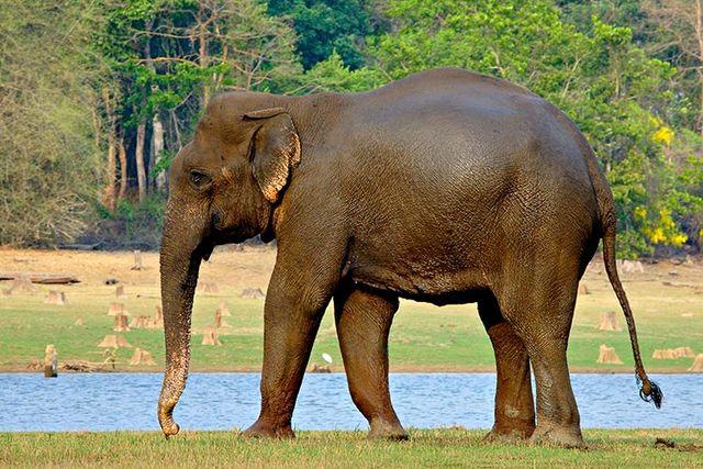 nagarhole national park elephant